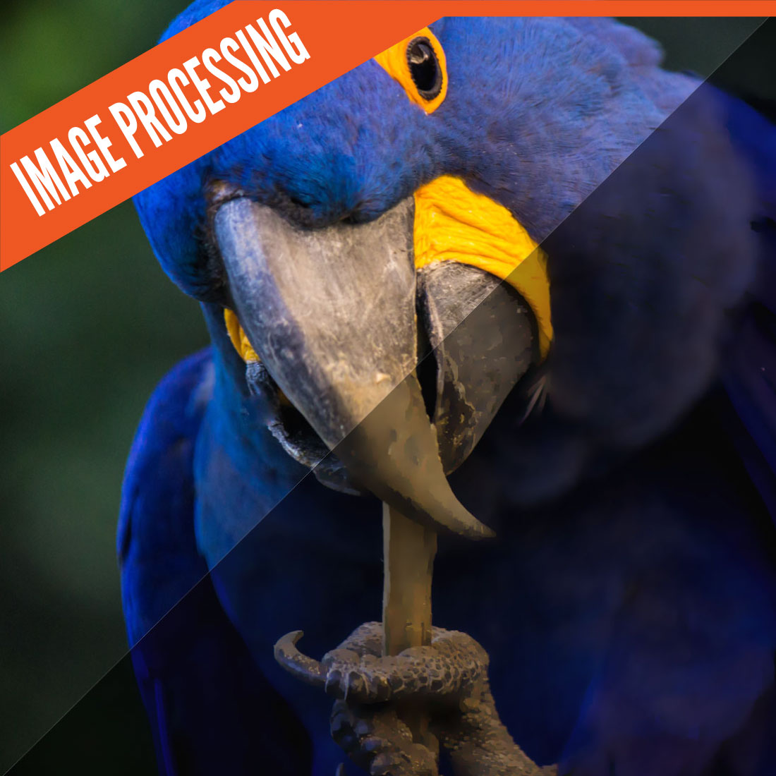 image-processing-feature